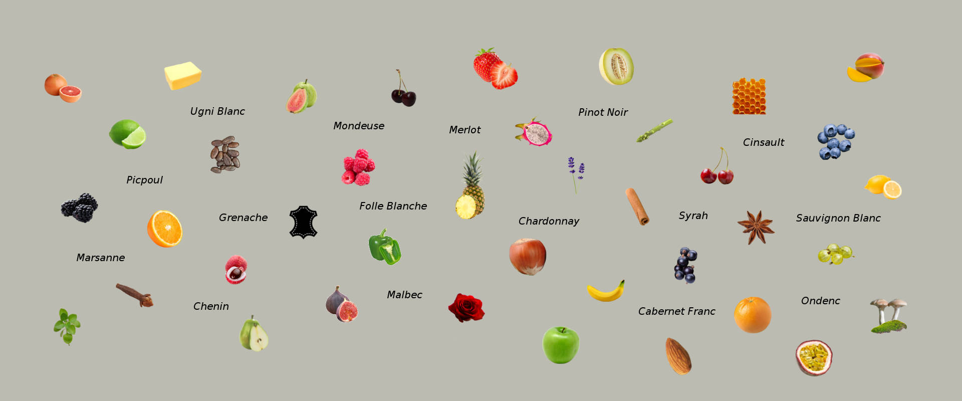 Wine Aroma maps wine grapes and aromas
