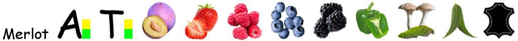 Eigenschappen en aroma's van Merlot druif