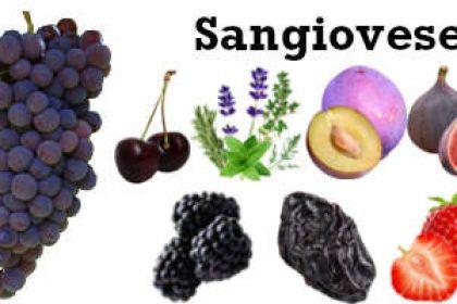 Eigenschappen Sangiovese Primaire Smaken